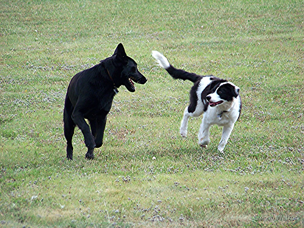 Dogs Just Want To Have Fun by Glenna Walker
