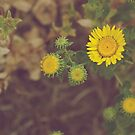 Country Flowers by lindsycarranza