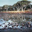 Phillip Island by Roz McQuillan
