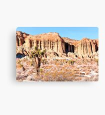cactus in the desert with blue sky in summer at California,  USA Canvas Print