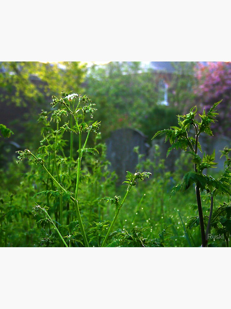 Graveyard Nettles at Dawn by Ruski