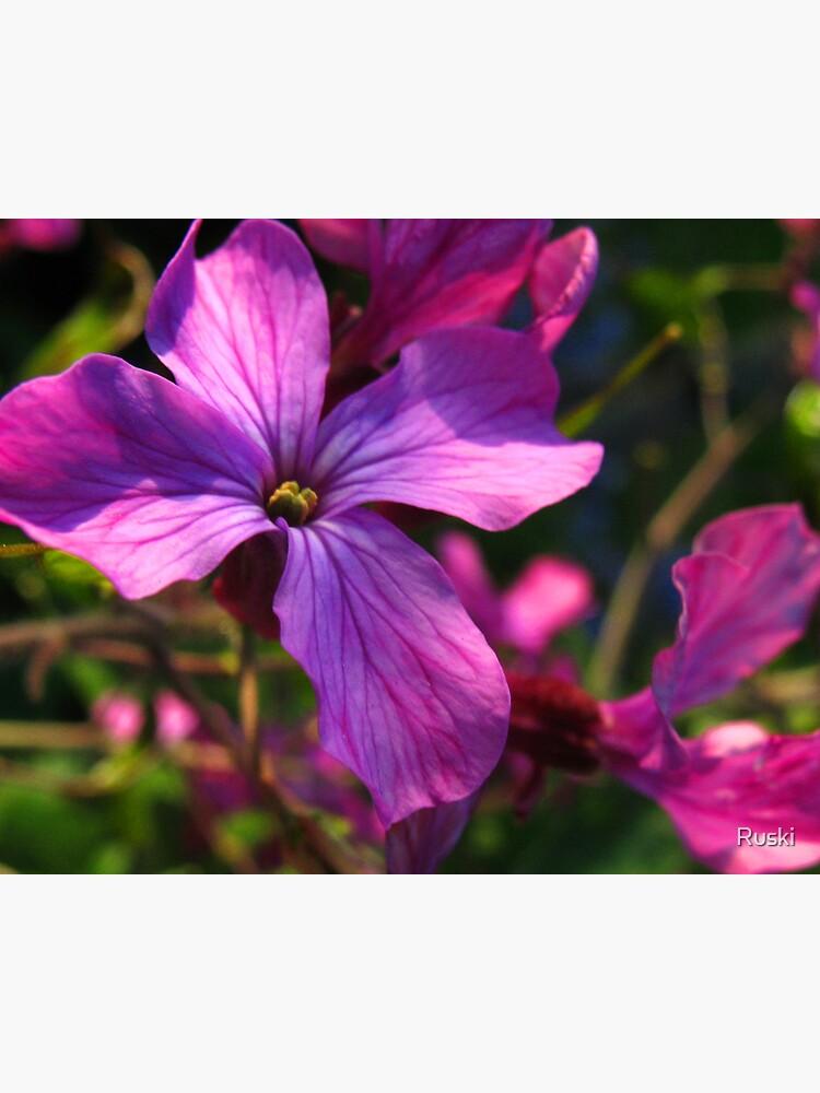 Flower by Ruski