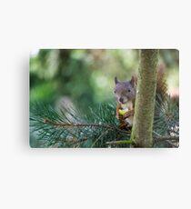 Squirrel - Cute Metal Print