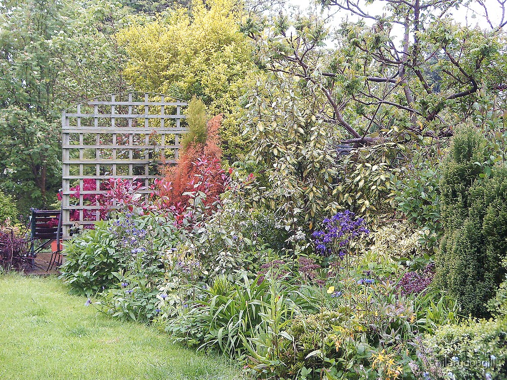 Herbaceous Border by hilarydougill