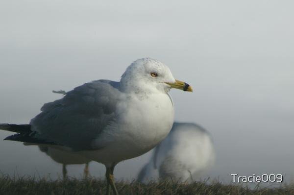 Snowy Birds by Tracie009
