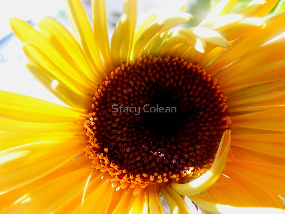 Beeming Flower by Stacy Colean