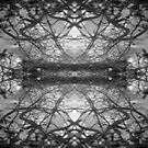 Tangles by Mel Brackstone