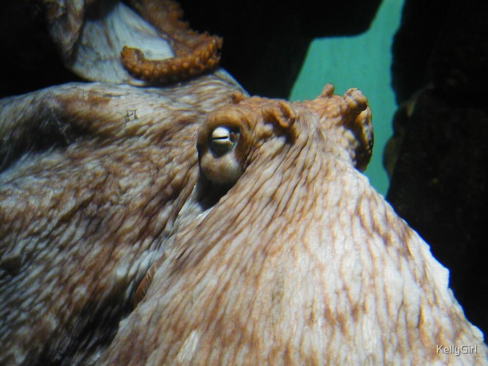 Sleeping Octopus by KellyGirl