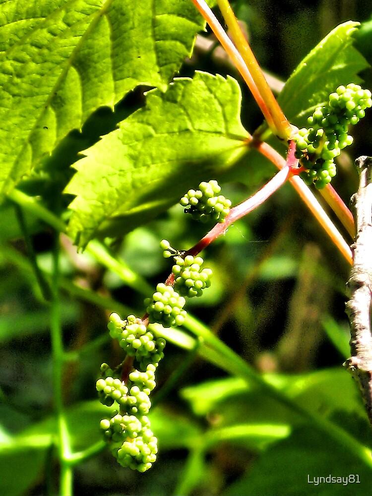 Berries by Lyndsay81