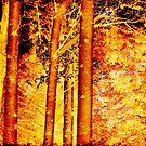 The birch trees by Mel Brackstone
