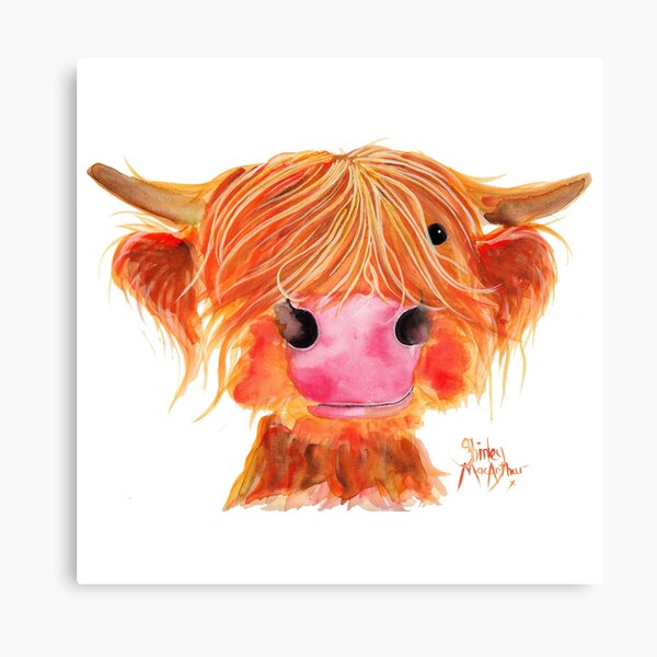 HIGHLAND COW ' ORANGE ' By Shirley MacArthur Canvas Print