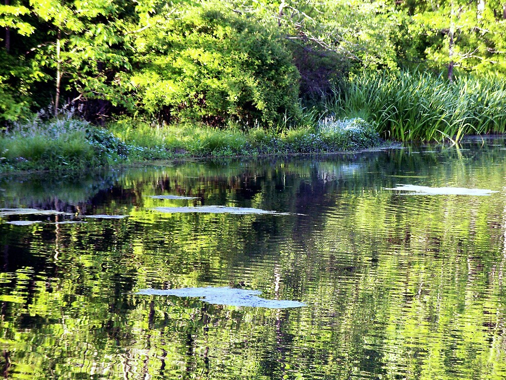 Another view of the pond by Judi Taylor