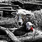 Ewe And Newborn Lamb by Al Bourassa