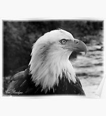 Black & White Eagle Bust Poster