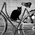 Black and Bike by ienemien