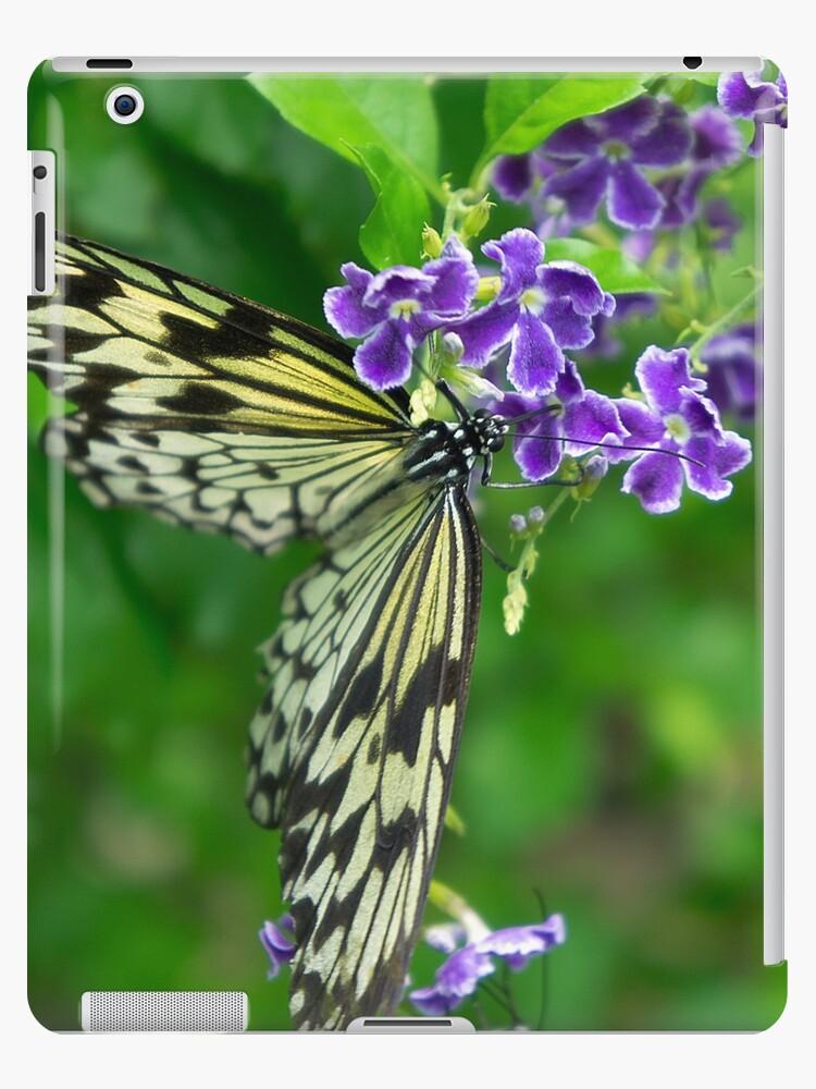 butterfly by likbatonboot