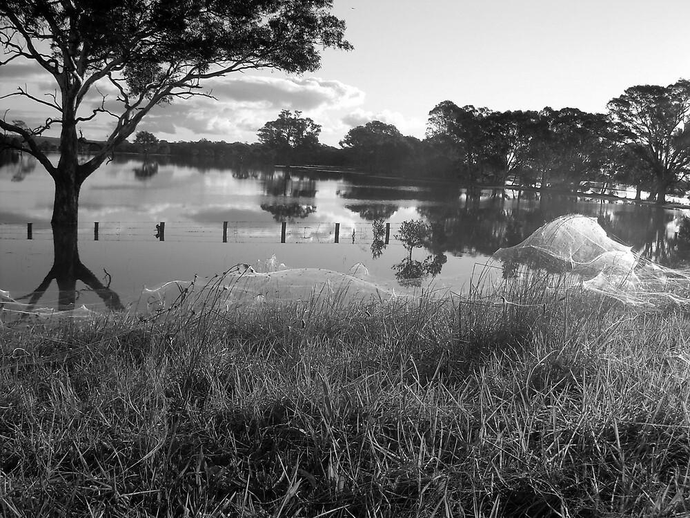 Scenic Swamp by Gundy