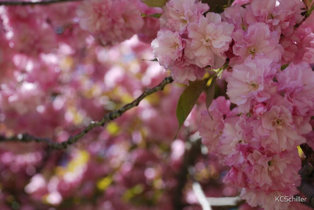 Pretty in Pink by KCSchiller