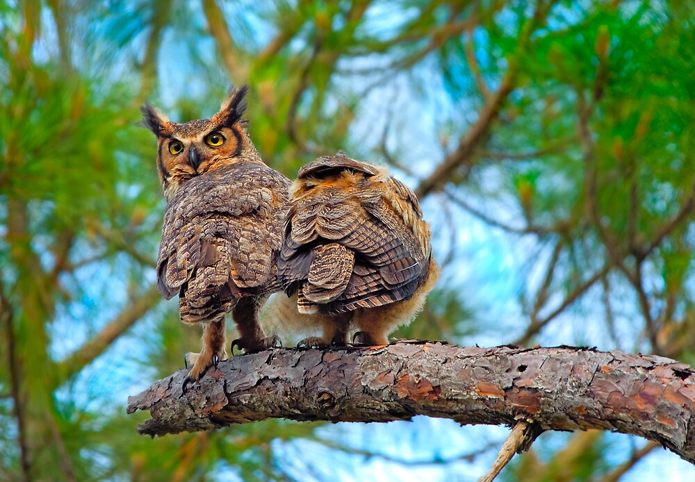 Great Horned Owl with Chick by Michael Wolf