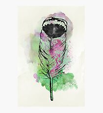 Watercolor feather AP094 Photographic Print
