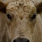 Moo. by Kirstyshots