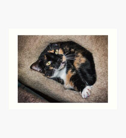 Taffy liebt ihre Kätzchenwohnung Kunstdruck