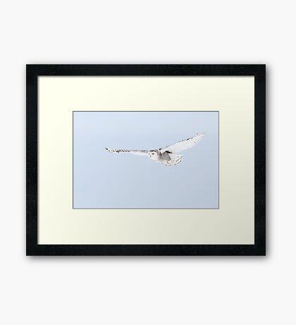 Glider - Snowy Owl Framed Print