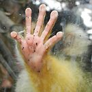 Stop! Bolivian Squirrel Monkey's Hand, Wellington Zoo  by sandysartstudio