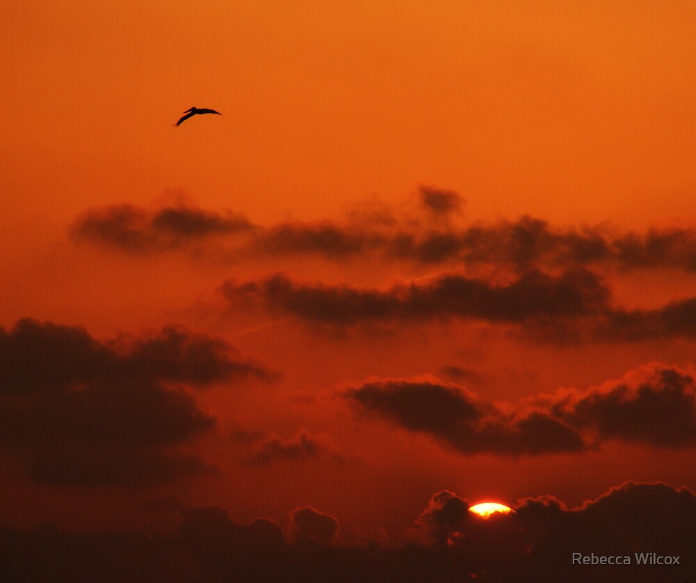 Across The Sky by Rebecca Brann