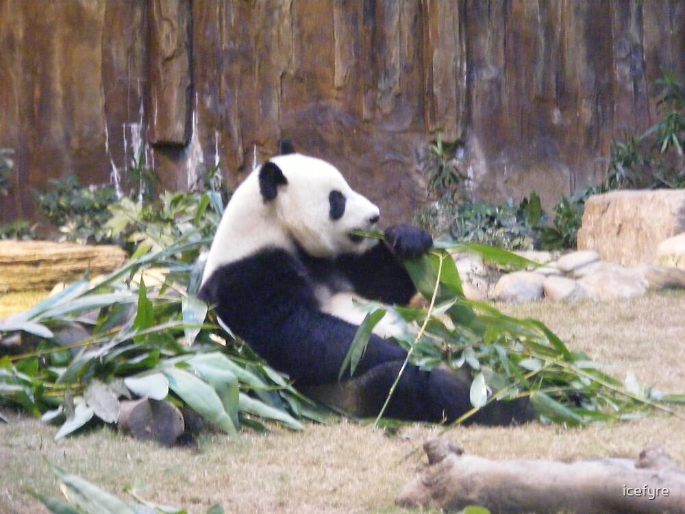panda by icefyre