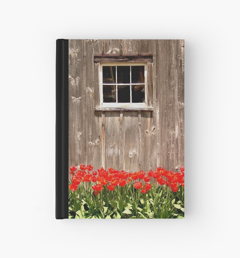 Red Tulips & Barn by jenndes