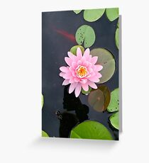 Beautiful Pink Lilypad Flower in the Water Greeting Card