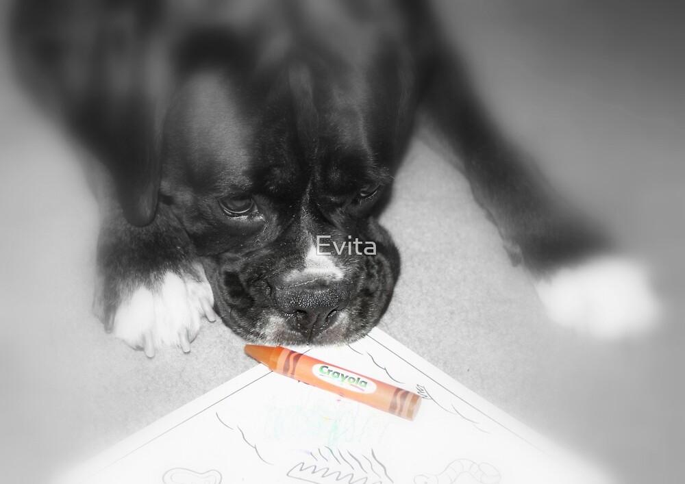 Orange -Boxer Dogs Series- by Evita