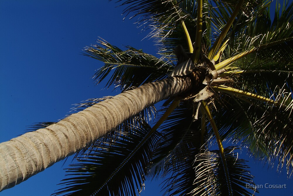Cable Beach Coconut Palm by Bryan Cossart