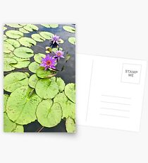 Vibrant Purple Lilypad Postcards