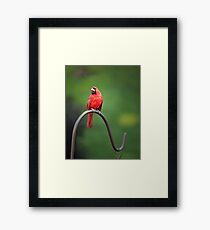 The Pensive Cardinal Framed Print