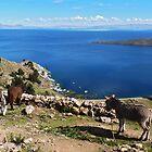 Donkeys' paradise by FollowHedgehog