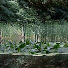 Pond With Nuphar Lutea by Mythos57