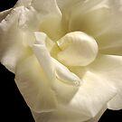 blushing bride by leanda  parker