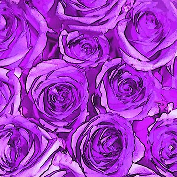 Magenta Roses by GriffinJDesigns