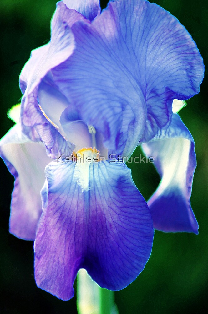 Purple Passion by Kathleen Struckle