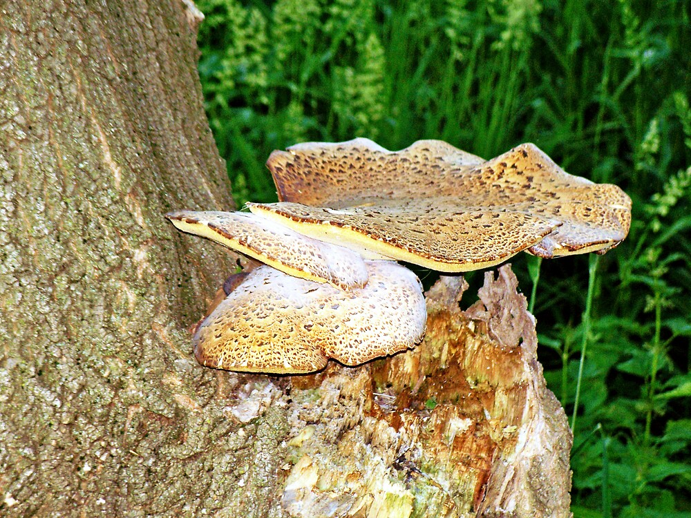 Mushroom Tree by Judi Taylor