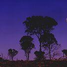 Moon Light by Elisha Rhea
