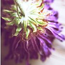 Dried Purple Flower by lindsycarranza