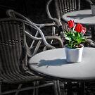 Table with tulips by Kurt  Tutschek