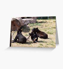 Baby Black Bears Playing Greeting Card
