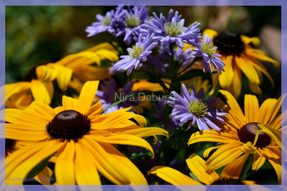 Smiling Suns Mixed with Delicate Purples by Nira Dabush