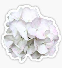 White Hydrangea Flower Sticker