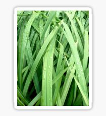 Tall Grass with Water Droplets on the Leaves Sticker