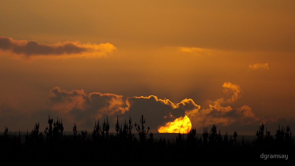 Sunset over pines 3 by dgramsay